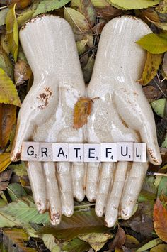 Grateful ... an important word every day of our lives