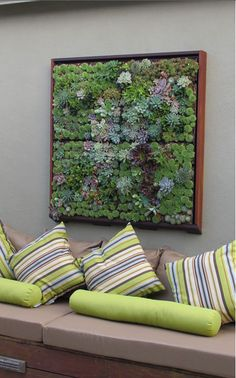DIRECTIONAL how to create living garden wall picture plus links to succlents I love this beautiful Living Art! It's framed succulents and there area step by step detailed instruction here. My next DIY! Cozy Living Rooms, Art Of Living, Living Walls, Plant Wall, Plant Decor, Planting Succulents, Planting Flowers, Succulents Diy, Succulent Frame