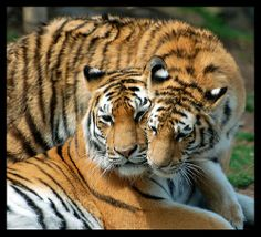 Love You Mom! | Flickr - Photo Sharing!