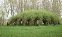 Auerworld Willow Palace by Sanfte Strukturen is a natural structure made of living willow rooted in the ground.