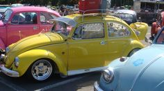 blue, yellow, pink vw bugs