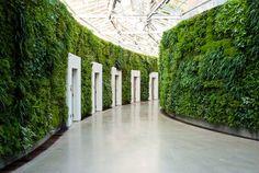 Vegetated corridor, Longwood Gardens, Kennett Square, PA, by nikkornova