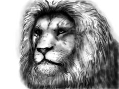 Leeuw, © Jeroenzwaan.com