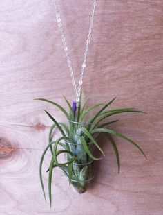 Air Plant Necklace, Wire Wrapped Tillandsia, Gold or Silver Chain, Living Jewelry- $25