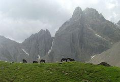 Cavalli al pascolo in Val Maira - Piemonte - foto di Roberto Beltramo