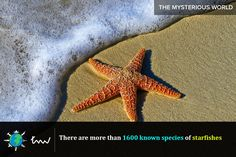 #fishes #starfishes #facts