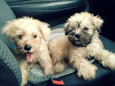 I want the one on the right!!! So cute!!