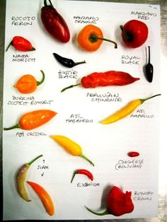 Tips on Growing Chillies (and Capsicums)?