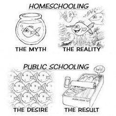 Homeschooled!! But I treat public/private schoolers the same way. We are all humans ya know..... I treat everybody the same. :)