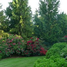Large evergreens with smaller elements in front to create depth of privacy