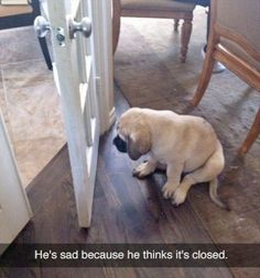 awesome Have Some Cute Animals ! ( 24 Pictures)