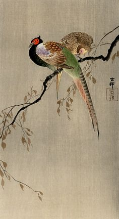 Ohara Koson:Two Pheasants (about 1910, Japan); japaneseaesthetics.tumblr.com