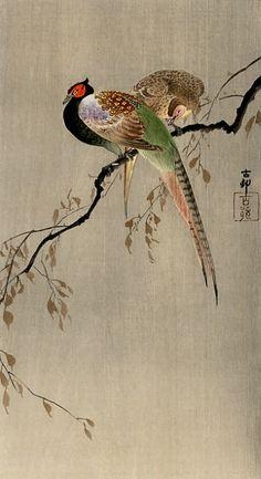 Ohara Koson:Two Pheasants (about 1910, Japan); japaneseaesthetics.tumblr.com