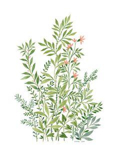 Plants illustration by Vikki Chu