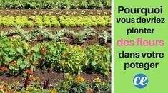 Pourquoi Vous Devriez TOUJOURS Planter des Fleurs Dans Votre Potager.