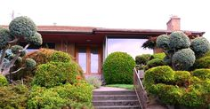 Seattle area mid-century home.  I want giant puffball bushs.