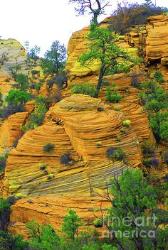~ Weathered Rock Formations ~ East Zion, Utah....