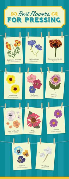 Best Flowers For Pressing - Crafting with Dry Flowers