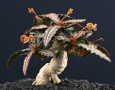 Socotra's Amazing Flora