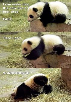 Panda Takes a Tumble. These little guys are always creating pandemonium.. Ouch, cute, Animals, Pandas