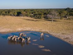 Little Makalolo comprises six traditional-style tents overlooking a vibrant waterhole, offering excellent game viewing in Hwange National Park, Zimbabwe. Tour Operator, Zimbabwe, Best Games, Wilderness, Safari, National Parks, Africa, Camping, Tours