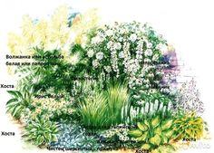 Клумба N 66, Белый цветник-многолетние цветы— фотография №1