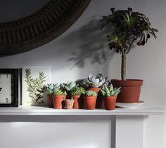 Urban Jungle Bloggers: Plantshelfie 2 by @wolvesinlondon
