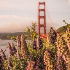 Golden Gate Bridge by mjcohenphoto #sanfrancisco #sf #bayarea #alwayssf #goldengatebridge #goldengate #alcatraz #california