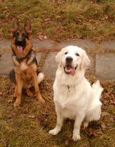 Способы «научить» собаку Способы «научить» собаку