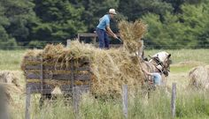 Two Amish boys stack hay on a wagon on July 15, 2011, in Middlefield, Ohio.