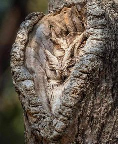 17 Photographers Who Got Extremely Lucky, and Their Shots Speak Louder Than Words is part of Nocturnal birds - Beautiful Owl, Animals Beautiful, Cute Animals, Brave Animals, Farm Animals, Beautiful Pictures, Weird Trees, Nocturnal Birds, Owl Pictures