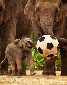 Elephant soccer