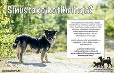 Kulkurien kautta koirat tulevat Suomeen yleensä suoraan omiin koteihinsa, mutta toisinaan ne tarvitsevat väliaikaista hoitopaikkaa ennen oman kodin löytymistä. Silloin tarvitaan kotihoitajia.