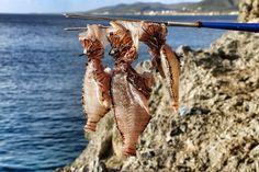 lionfish Curaçao