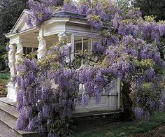 Wisteria covered summer house in the gardens of Buckingham Palace, UK