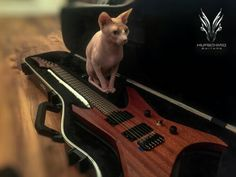 I love this cat!  http://hufschmidguitars.com