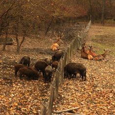 Kisvasúton a gemenci erdőben - Messzi tájak Európa gyalogtúra   Utazom.com utazási iroda