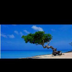 Aruba - took my mom here!