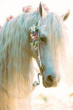What a pretty horse! I love the lighting and the flowers in its mane!