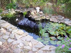 make our pond look better... like this