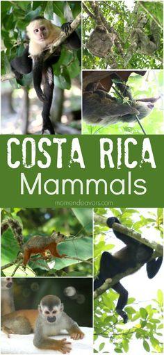 Costa Rica Mammals -