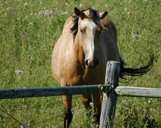 Beauty In the Pasture  8x10 Photo  Horse by Snaphappy72 on Etsy, $15.00