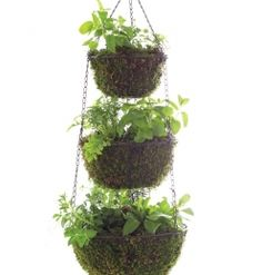 Three Tier Hanging Herb Planter