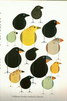 charley harper galapagos finches.