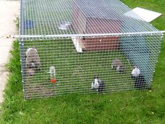 Things to Consider when Making Rabbit Hutch Plans: Rabbit Hutch ...