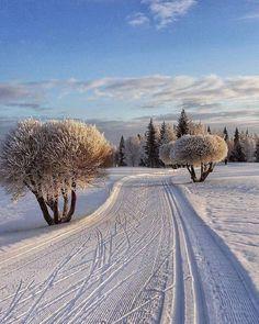 """🌥Under a Winter sun☃️🧣🧤 ⛄️🧣🧤"" Winter Szenen, I Love Winter, Winter Magic, Winter Christmas, Snowy Day, Snow Scenes, Winter Pictures, Winter Beauty, Winter Landscape"