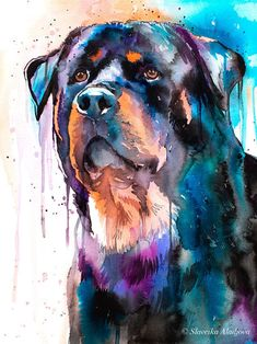 Rottweiler watercolor painting print by Slaveika Aladjova Dog Paintings, Painting Prints, Watercolor Paintings, Art Prints, Watercolor Paper, Rottweiler Funny, Rottweiler Puppies, Chihuahua Dogs, Pet Dogs