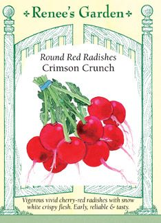 Radish, Crimson Crunch: keep moisture even/consistent, sow 2-3 inches apart, plant every 7 days for a continuous supply