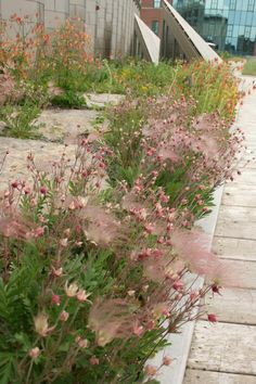 The green roof at SUNY ESF's Gateway Center wins a Land Ethics Award of Merit from the Bowman's Hill Wildflower Preserve for its significant contribution to the promotion of native plants and strong land ethic while promoting sustainable