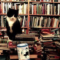 Gatos e livros!
